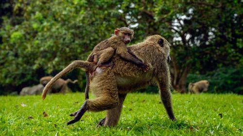 Congo : Total accusé de mettre en péril la biodiversité du plus vieux parc naturel d'Afrique   https://www.francetvinfo.fr/monde/afrique/environnement-africain/congo-total-accuse-de-mettre-en-peril-la-biodiversite-du-plus-vieux-parc-naturel-d-afrique_3466