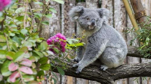 Les visiteurs du zoo de Beauval invités à reporter leur venue en raison d'une affluence exceptionnelle