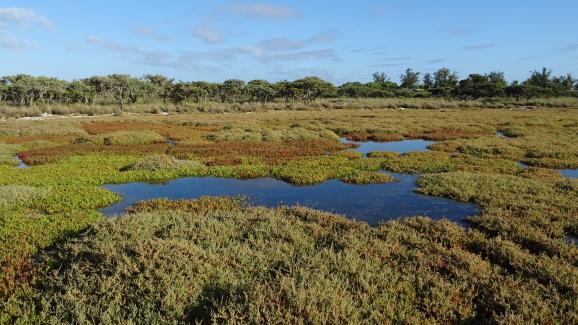 Mangrove sur l\'île Europe, des îles Eparses