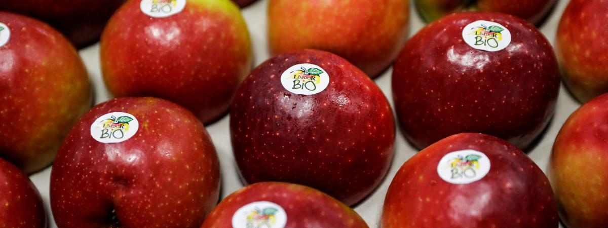 Des pommes bio dans une coopérative de Saint-Yrieix-la-Perche (Haute-Vienne), le 21 décembre 2018.