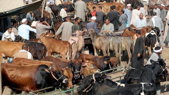 Un marché aux bestiaux près du Caire, le 9 août 2018