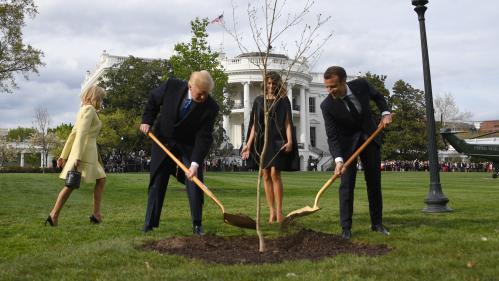 Le chêne symbole de l'amitié Trump-Macron, planté à la Maison Blanche, est mort