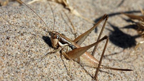 VIDEO. Italie : des millions de sauterelles ravagent les champs de Sardaigne