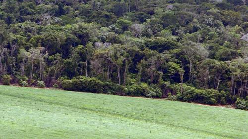 Les élevages européens raffolent de soja OGM et contribuent à la déforestation, dénonce Greenpeace