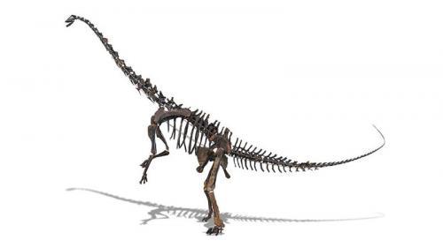 Un squelette de sauropode, dinosaure cousin du diplodocus, mis aux enchères à Paris