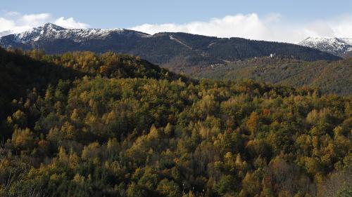 Ariège : la préfète se veut rassurante après plusieurs attaques d'ours