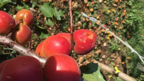 """""""C'est un état de désolation, de désarroi"""" : les agriculteurs de la Drôme """"effondrés"""" après les violents orages de samedi"""
