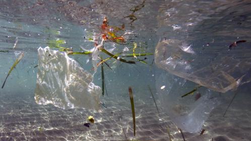 Les pays du G20 s'engagent à réduire la pollution plastique en milieu marin