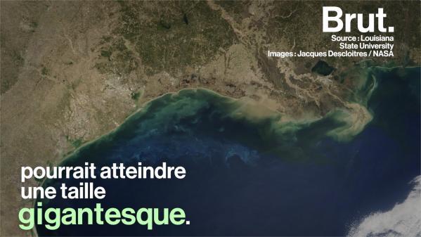 """VIDEO. Dans le golfe du Mexique, une immense """"zone morte"""" asphyxie la vie sous-marine"""