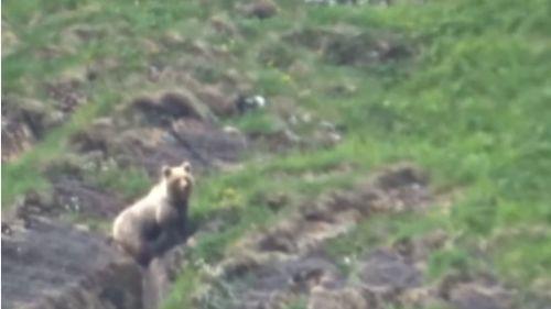 VIDEO. Pyrénées : un enfant de 9 ans rencontre un ours à l'état sauvage (et le filme)
