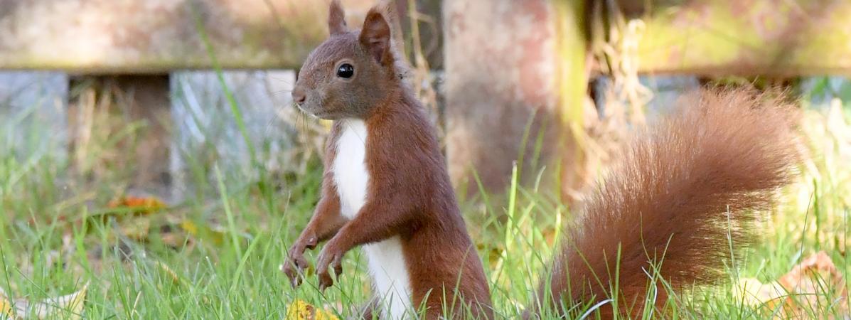 Etats-Unis : il donnait de la méthamphétamine à son écureuil pour en faire un animal d'attaque