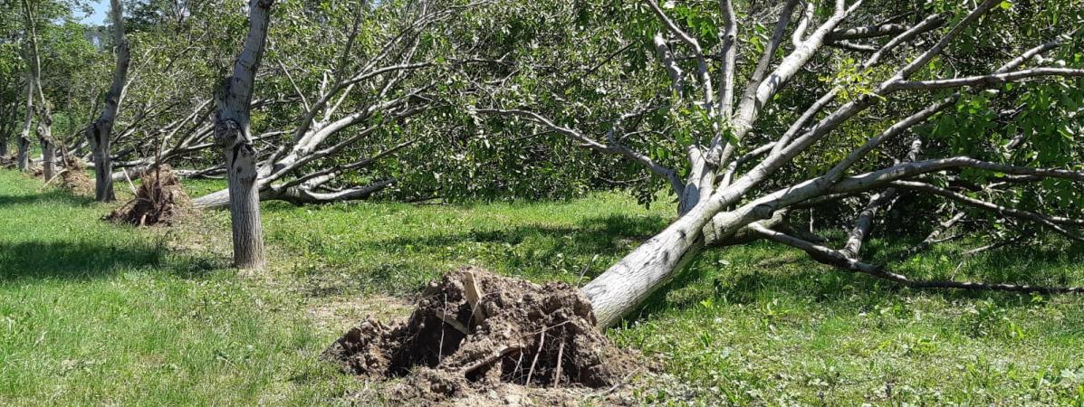 Écoles fermées, arbres abattus : le premier bilan des intempéries dans la Drôme