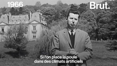 VIDEO. Voilà comment on imaginait le futur de l'élevage industriel en 1966
