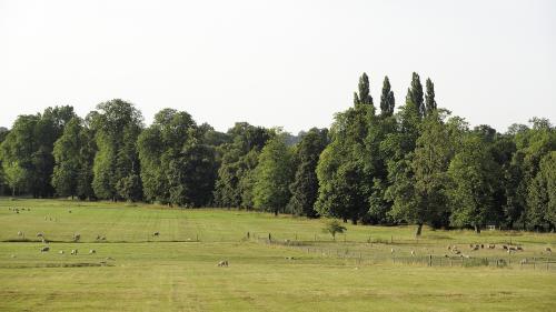 Biodiversité : un rapport alerte sur la fragilité de la nature en Ile-de-France