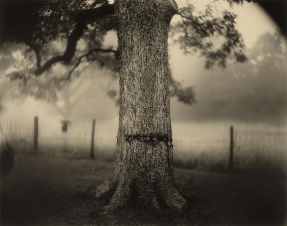 """Sally Mann, \""""Deep South, Untitled (Scarred Tree)\"""", 1998, Washington, National Gallery of Art, Fonds Alfred H. Moses et Fern M. Schad"""