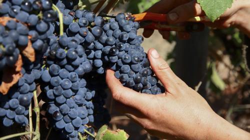 La hausse des températures rendra-t-elle le vin meilleur ?