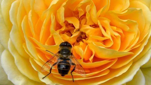 Canicule : les abeilles souffrent aussi de la chaleur (mais elles ont élaboré plein de techniques pour y résister)