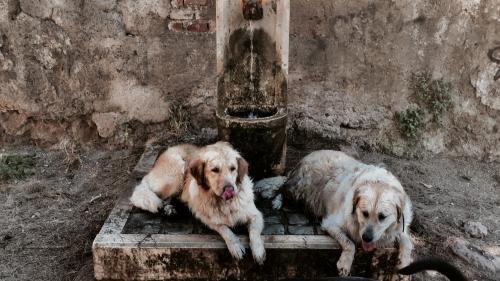 Canicule : brûlures, déshydratation... Quels risques les animaux courent-ils à cause de la chaleur ?
