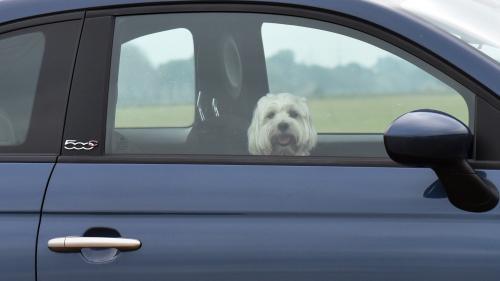 Canicule : a-t-on le droit de briser la vitre d'une voiture pour porter secours à un animal ?