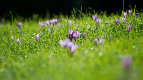 Après la mort d'un sexagénaire, l'Anses alerte sur les risques d'intoxication aux plantes