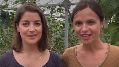 Produits locaux : une start-up de producteurs bio permet de manger autrement