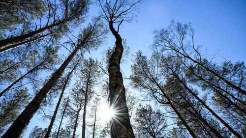 """VIDEO. """"C'est la meilleure solution face au réchauffement"""" : un chercheur veut planter des milliards d'arbres pour sauver la planète"""