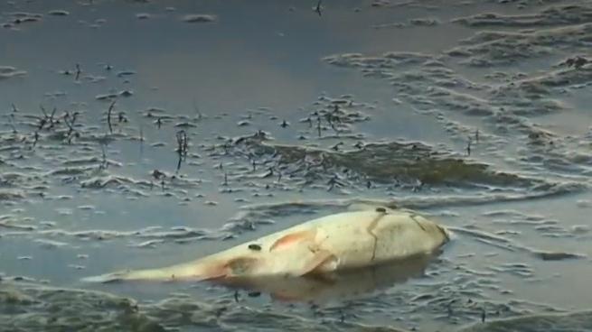 Réseau de rencontres de poissons