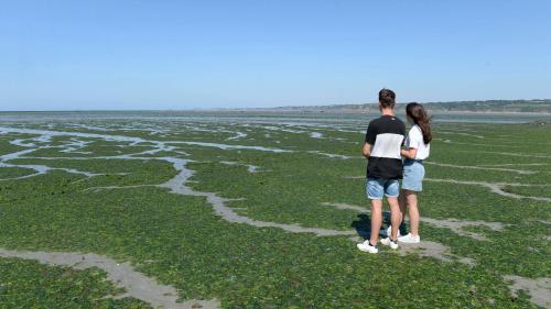 Mort suspecte, phénomène précoce, plan contesté... Trois signes qui montrent que la Bretagne n'en a pas fini avec les algues vertes