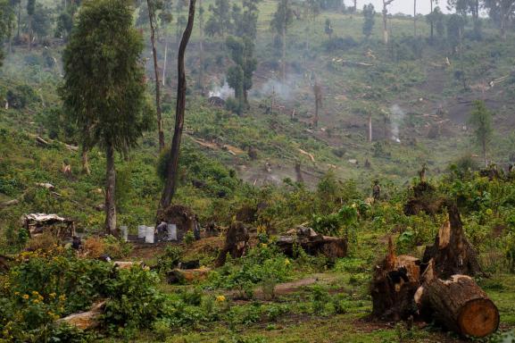 Exemple de déforestation dans la forêt tropicale de Kitchanga en République démocratique du Congo, près de Masisi (province du Nord-Kivu), où, depuis longtemps, les arbres sont abattus de manière anarchique afin de les transformer en charbon (16 juillet 2012).