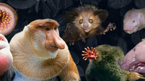 """""""On voudrait une nature à l'image de ce qu'on aime"""": pourquoi les animaux moches sont plus menacés que les autres"""