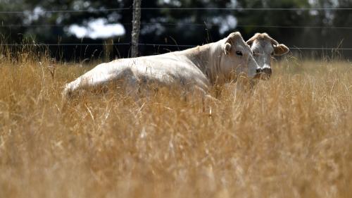 Sécheresse : Paris demande à l'UE une avance d'un milliard d'euros d'aides aux agriculteurs
