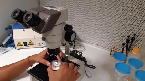 """Projet de loi bioéthique : au centre de PMA de l'Institut mutualiste Montsouris à Paris, on """"fabrique"""" des bébés en laboratoire"""
