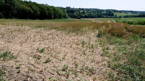 """Fourrage à bas coût, """"Bon Coin"""" du fumier... Comment les agriculteurs s'entraident pour faire face à la sécheresse"""