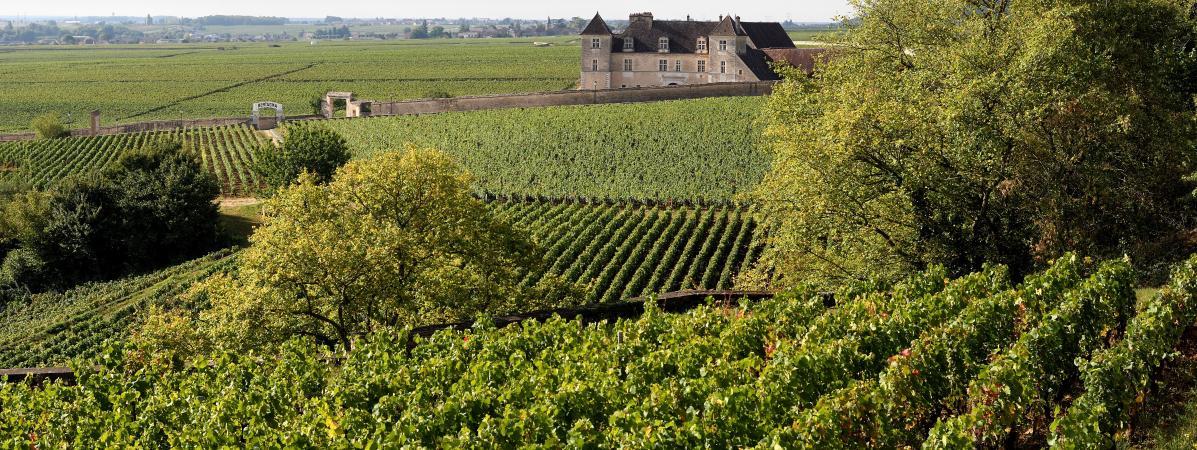 Vignoble français : de nouvelles régions émergent