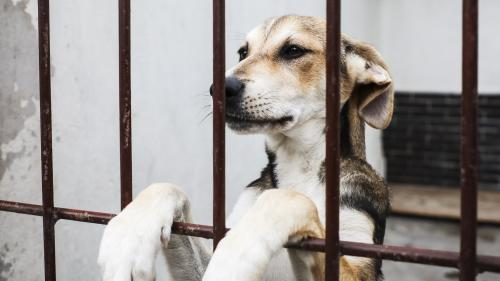 Plus de 8 000 animaux ont été abandonnés depuis le début de l'été, alerte la SPA