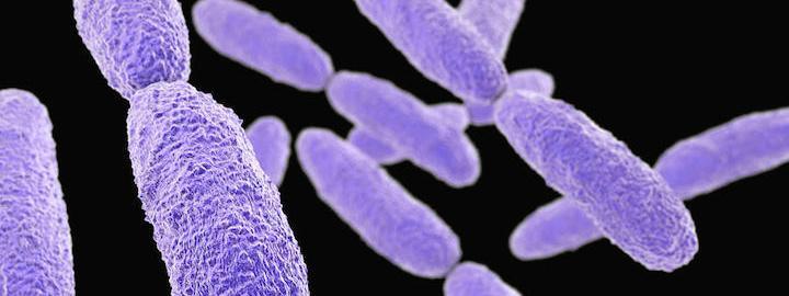 Une bactérie résistante aux antibiotiques se propage dans les hôpitaux européens