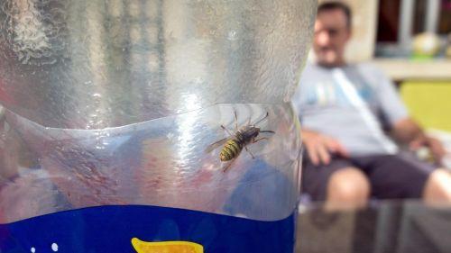Guêpes, abeilles, méduses ou serpents : piqûres ou morsures, démêlez le vrai du faux de ce qu'il faut faire