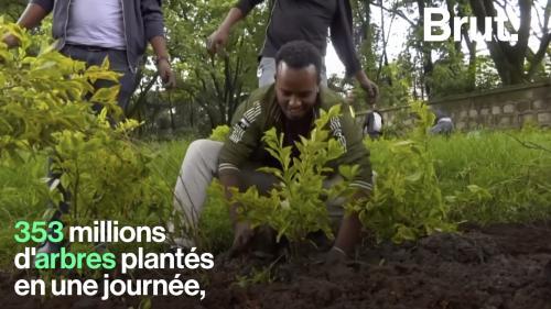 VIDEO. En Éthiopie, 353 millions d'arbres plantés en 12 heures