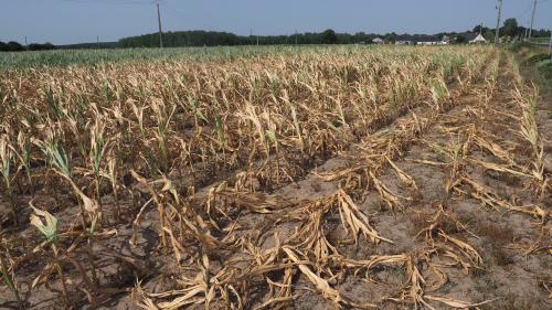 Rapport du Giec: l'humanité au défi de nourrir 10milliards de personnes sans ravager la planète