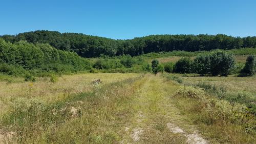 """""""On veut qu'il y ait une vie dans cette rivière"""" : à Sivens, la sécheresse ravive le conflit entre pro et anti-barrage"""