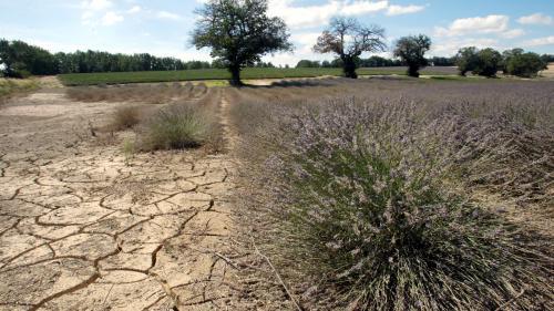 """Sécheresse : """"Il y a des secteurs en France qui n'ont pas eu une seule goutte d'eau ces deux derniers mois"""""""
