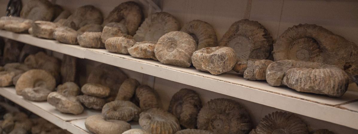 Le pillage des fossiles de dinosaures se poursuit au Maroc