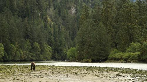 Ce que l'on sait de la mort d'un Français attaqué par un grizzly au Canada