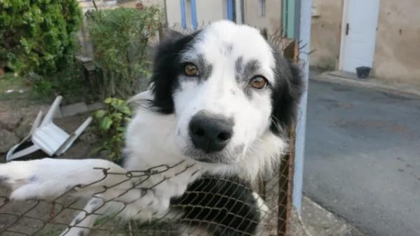 """""""Rendez-nous Gribouille !"""" : un homme porte plainte contre la SPA pour avoir fait adopter et castrer son chien disparu"""