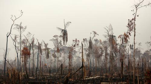 Incendies en Amazonie : des centaines de nouveaux départs de feu entre jeudi et vendredi