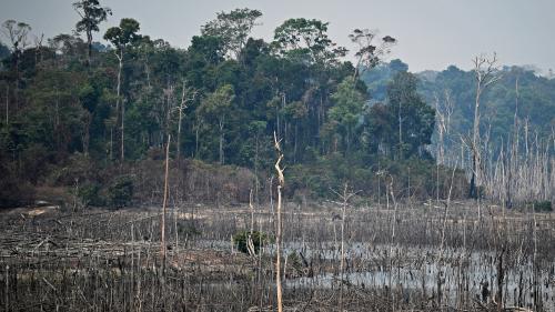 """Incendies en Amazonie : """"Ce ne sont pas de simples feux, c'est l'œuvre du capitalisme"""", dénonce le Grand conseil coutumier des peuples amérindiens"""