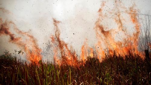 Incendies en Amazonie : des pays du G7, LVMH et Leonardo DiCaprio promettent des millions d'euros d'aide