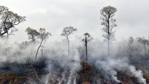 """Incendies en Amazonie : """"Pour que la forêt revienne en l'état, il faut plusieurs années"""""""