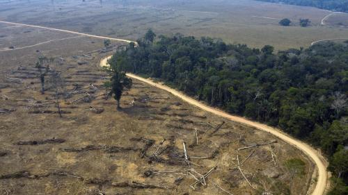 Incendies en Amazonie : la France participe-t-elle à la déforestation ?