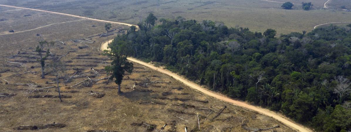 Une zone de la forêt amazonienne déboisée et brûlée le 24 août 2019 près de Porto Velho (Brésil).